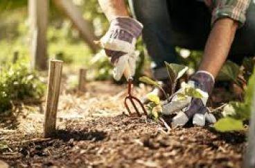 The benefits of gardening